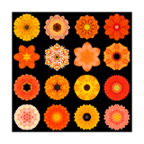 Big Collection of Various Orange Pattern Flowers