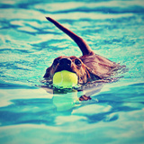 A Dachshund with a Ball in His Mouth