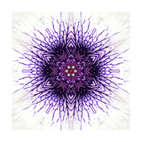 White Concentric Flower Center: Mandala Kaleidoscopic