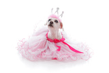 Pampered Princess or Ballerina Pet