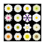 Big Collection of Various White Pattern Flowers