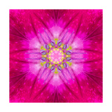 Purple Concentric Flower Center: Mandala Kaleidoscopic Design