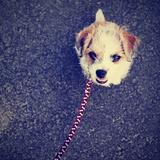 A Cute Terrier