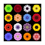 Big Collection of Various Colorful Pattern Flowers