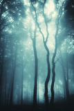 Mysterious Trees in a Forest with Fog