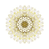 White Chrysathemum Mandala Flower Kaleidoscopic