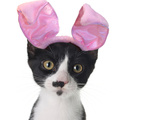 Funny Black and White Kitten Wearing Pink Easter Bunny Ears