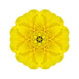 Yellow Concentric Marigold Mandala Flower