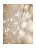 Cherry Tree Blossom  Abstract Soft Color Floral Background