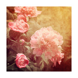Art Floral Vintage Background with Pink Peonies