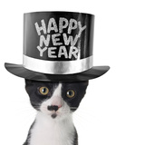 Funny Kitten Wearing a Happy New Year Hat