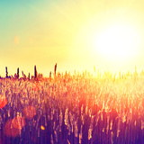Field  Beautiful Nature Sunset Landscape