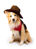 Border Collie Cowboy