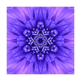 Blue Concentric Flower Center: Mandala Kaleidoscopic