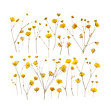 Pressed Yellow Wildflowers