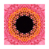 Red Concentric Flower Center: Mandala Kaleidoscopic Design