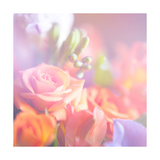 Beautiful Flowers Made with Color Filters  Floral Background