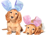 Easter Bunny Dachshunds Puppies