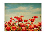 Vintage Paper Textures - Field of Poppies