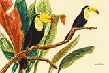 Tropical Toucans II