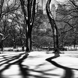 Shadows of Trees Play in Central Park Snow