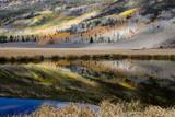 Pond reflects aspen trees and conifers Fishlake  Utah  USA
