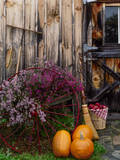 Outside barn in autumn at Drury Place Weston  Vermont  USA
