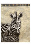 Zebra Africa 2
