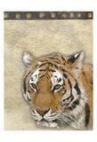 Tiger Africa 2