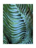 Emerald Feathering II