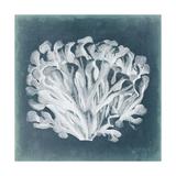 Azure Coral III Reproduction d'art par Vision Studio