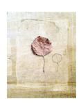 Herbarium VI