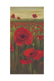 Red Poppies in Field II
