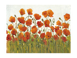 Rows of Poppies I
