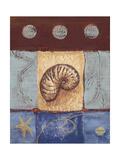 Aquamarine Nautilus