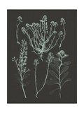 Mint and Charcoal Nature Study III