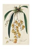 Spring Orchid VI