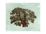 Spa Tree II