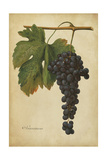 Vintage Vines I