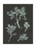 Mint and Charcoal Nature Study II