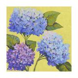 Spring Hydrangeas II