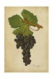 Vintage Vines IV