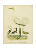 Antique Crane and Heron