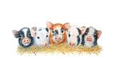 Five Little Pigs  2012