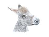 Little Donkey II  2014
