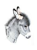 Little Donkey  2012