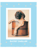 Bucket Dweller