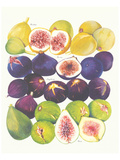 Figs and Dates
