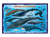 Whales and Dolphins for Kids Reproduction d'art
