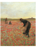 Girls in Poppy Field